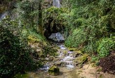 Водопад в сочном лесе Стоковое Фото