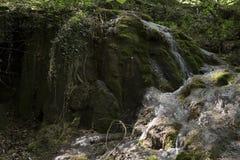 Водопад горы на мхе Стоковые Изображения RF