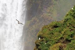 водопад горы Стоковые Фото