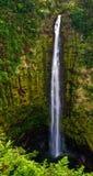 водопад джунглей Гавайских островов Стоковое Изображение RF