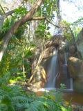 водопад дождевого леса Стоковые Изображения RF