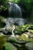 водопад дождя пущи Стоковые Изображения