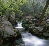 водопад дождя Стоковые Изображения
