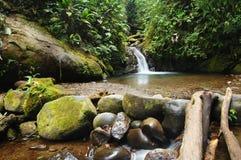 водопад естественной весны Стоковые Фото