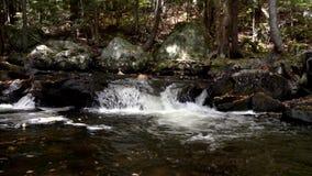 Водопад замедленного движения небольшой с оранжевыми листьями падая от деревьев в поток видеоматериал