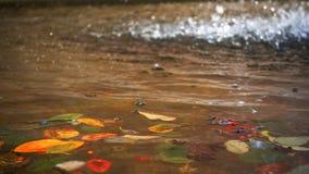 Водопад и листья осени на воде озера сток-видео