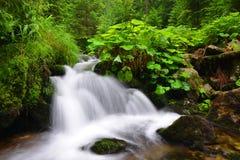 Водопад на потоке горы Стоковое Изображение