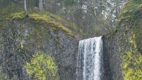 Водопад окруженный мхами и лишайниками весеннего времени сток-видео