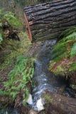 Водопад под отрезанным деревом Стоковая Фотография