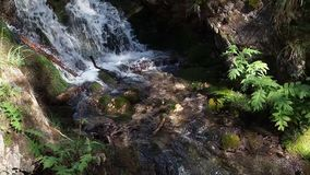 Водопад потока леса видеоматериал