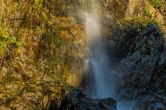 Водопад пропуская вниз с стороны утеса при заводы растя из утеса Стоковое Фото