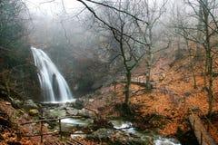 водопад пущи осени Стоковая Фотография