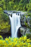 водопад пущи тропический стоковые фото