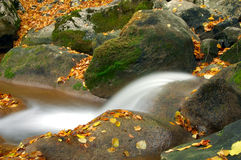 водопад пущи тропический Стоковая Фотография RF