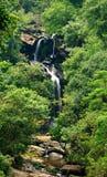 водопад пущи Стоковое фото RF