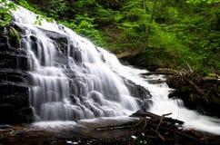 водопад пущи Стоковое Фото