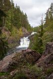 водопад пущи стоковые изображения