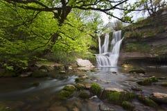 водопад пущи Стоковые Изображения RF