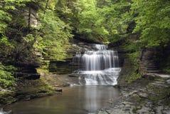 водопад пущи Стоковое Изображение