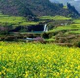 водопад рапса цветка luoping Стоковые Изображения RF