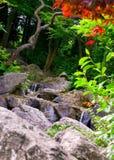 водопад сада стоковое фото