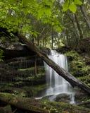 водопад семг реки gorge Стоковая Фотография