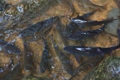водопад Таиланда пруда рыб Стоковые Фотографии RF