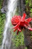 водопад цветка Стоковая Фотография