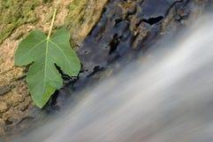 водопад 13 Стоковые Фото
