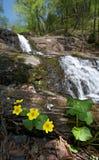 Водопад 4 Стоковые Изображения RF