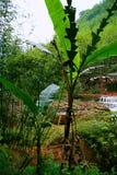 Водопад Chishui Стоковые Изображения