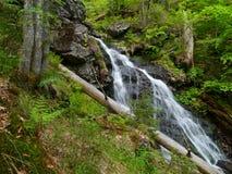 Водопад Höllbachgspreng, лесистый массив утеса стоковое изображение rf