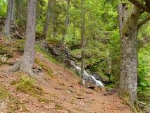 Водопад Höllbachgspreng, лесистый массив утеса стоковая фотография rf