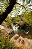 водопад sri lanka стоковое фото rf