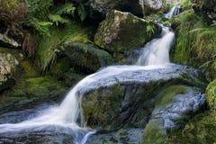 водопад wicklow Стоковые Изображения