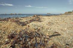 Водоросли и грубозернистый песок среднеземноморского пляжа Стоковое Изображение RF