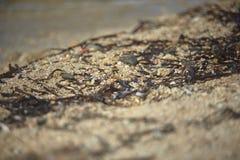 Водоросли на песке Средиземного моря Стоковое Фото
