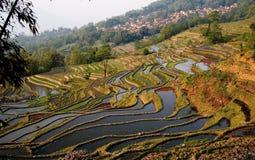 водоросли field красный цвет terraced Стоковые Изображения RF