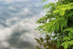 Воды облака космоса экземпляра отражая и ветвь дерева стоковые фото