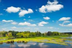 воды обоев реки Польши narew потока Стоковые Изображения RF