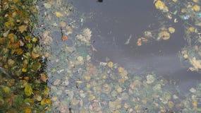 Воды utumn  Ð Санкт-Петербурга стоковая фотография rf
