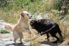 воевать собак Стоковое фото RF