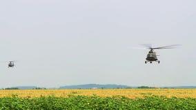 Военные вертолеты летают над полем солнцецветов, враждебностями, воздушными судн