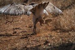Военный орел стоковая фотография rf