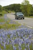 Вождение автомобиля за lupines обочины Стоковые Изображения RF