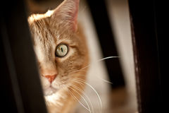 возбужденный кот Стоковое фото RF