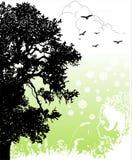 возвращение природы к Стоковое Изображение RF