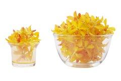 возглавляет желтый цвет орхидеи Стоковые Изображения RF