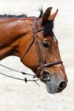 возглавьте лошадь Стоковые Фото