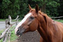 возглавьте лошадь s Стоковые Фотографии RF